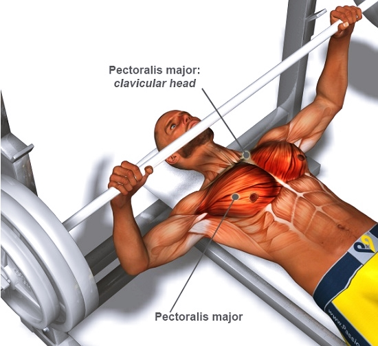 Bench press big numbers power lifting or proper form bodybuilding